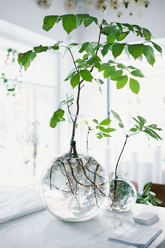 plants with roots in glass jars / sfgirlbybay