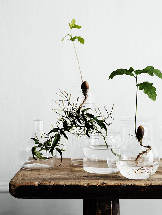 plant roots in glass jars / sfgirlbybay