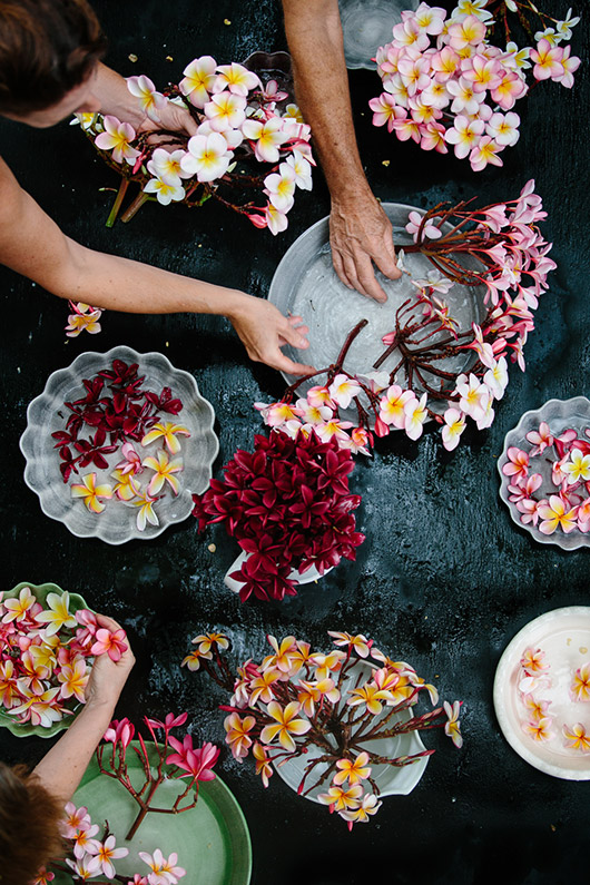 flowers photographed from above by luisa brimble. / sfgirlbybay