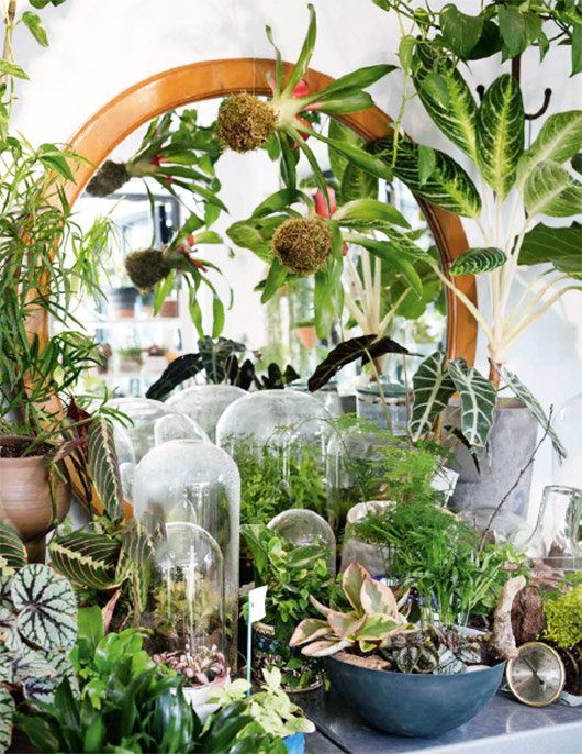 Urban Jungle: living and styling with plants. / @sfgirlbybay