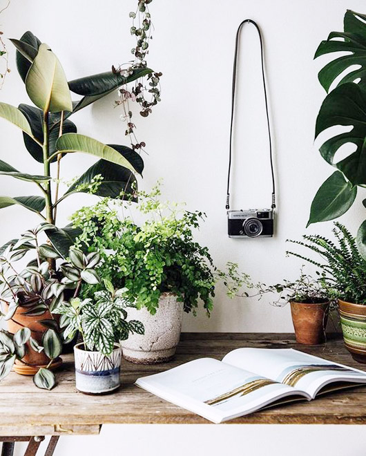 desk area with lots of potted plants / sfgirlbybay