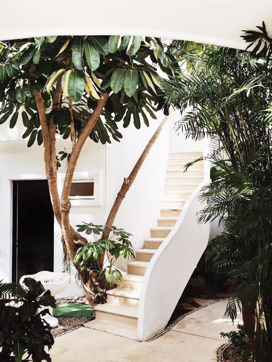 white stairwell with outdoor plants / sfgirlbybay
