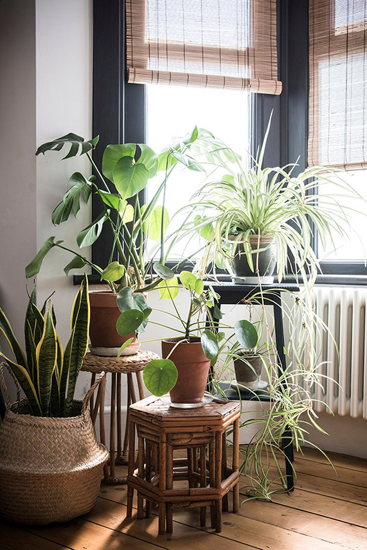 houseplants via house crush tour on abigail ahern. / sfgirlbybay